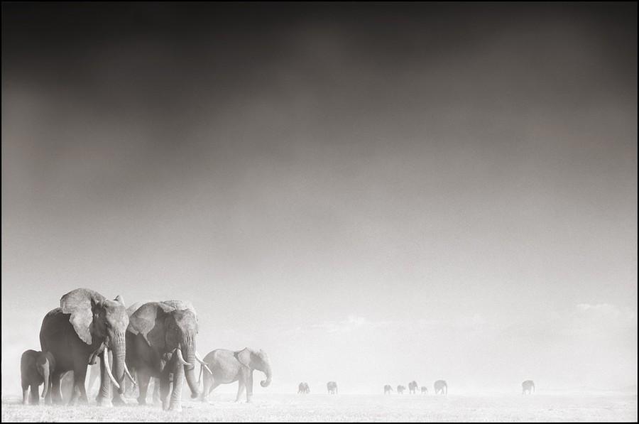 elephant Nick brandt photo