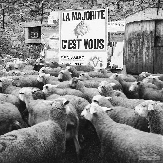 les moutons majorite