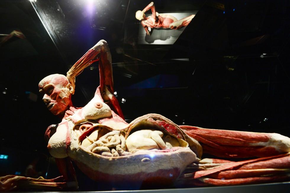 Cadavre plastination Gunther von Hagens (1)