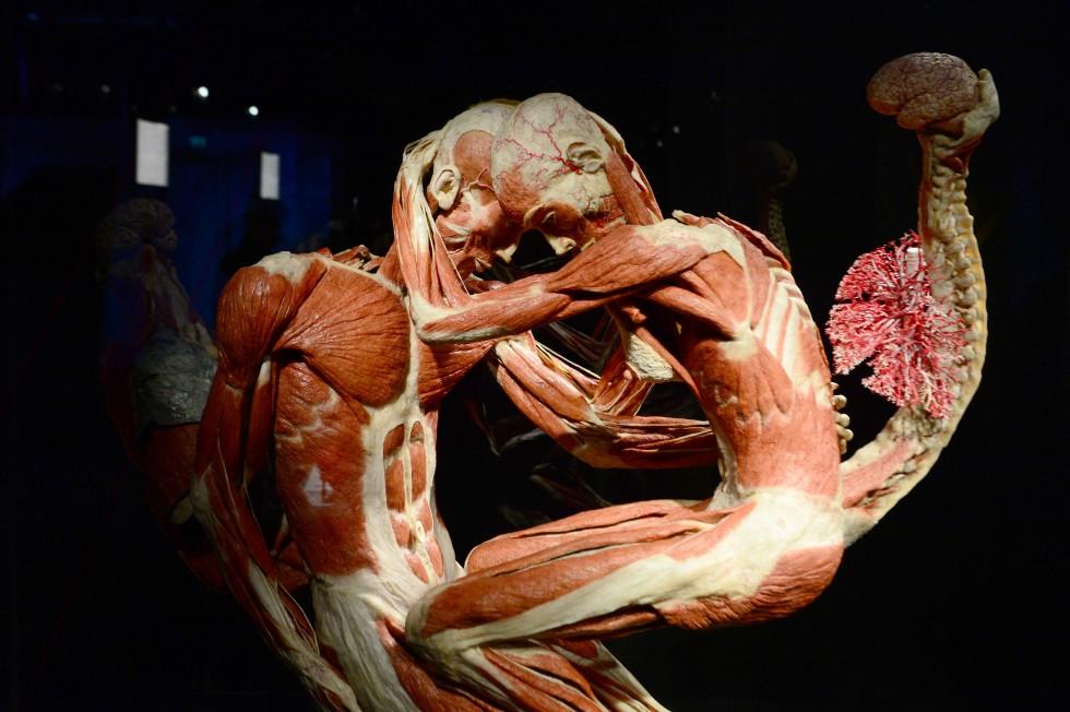 Cadavre plastination Gunther von Hagens (2)