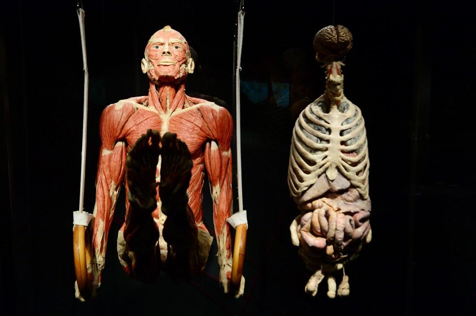 Cadavre plastination Gunther von Hagens (3)
