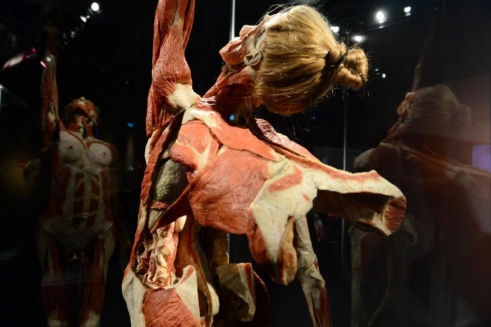 Cadavre plastination Gunther von Hagens (6)