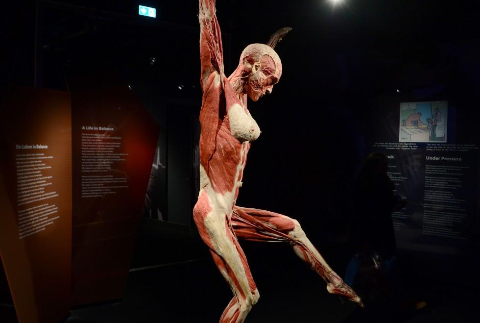 Cadavre plastination Gunther von Hagens (7)