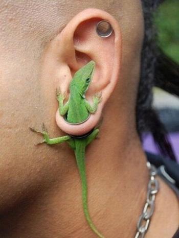 piercing lezard